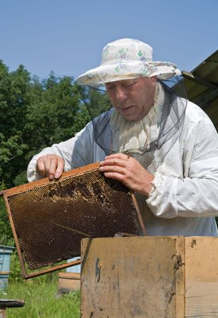 A beekeeper in veil at apiary among hives. Summer, sunny day.
