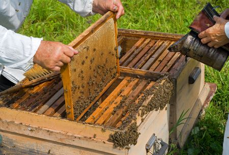 A close-up of the beehive. Two beekeepers work on an apiary. Stock Photo