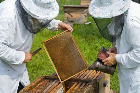 Two beekeepers work on an apiary.