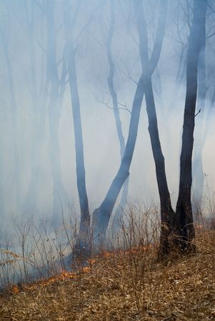 blasting: A fire in leafy forest. Early spring. Stock Photo
