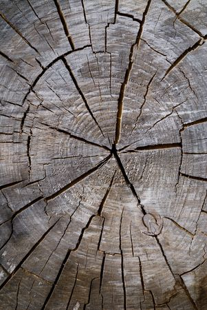 A close-up of the surface of old cut of tree. Stock Photo - 5996528