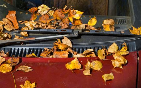 A close up of the yellow autumn leaves on car.