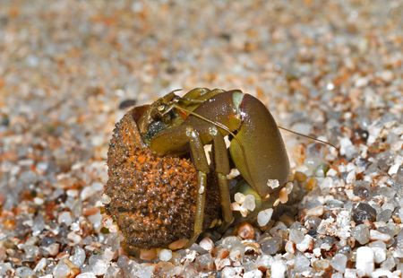 A close up of the hermit crab on sand. photo