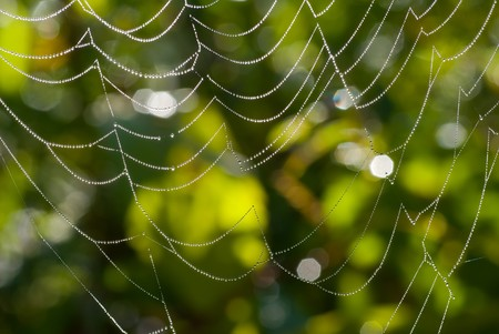 A close up of the spider-web with drops of dew. Stock Photo - 7026183