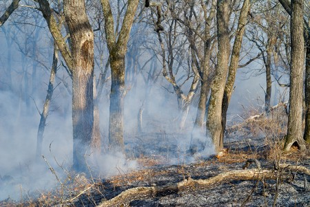 waif: A fire in leafy forest. Early spring. Stock Photo