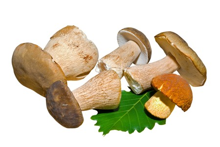 A close up of the mushrooms (Boletus edulis (cep) and Leccinium extremiorientale). Isolated on white. photo