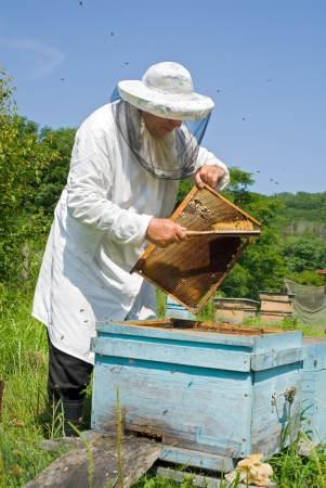 A beekeeper in veil on apiary at hive. Summer, sunny day.