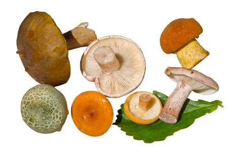 A close up of the edible mushrooms (Boletus edulis (cep),  Leccinium extremiorientale), Russule). Isolated on white. Stock Photo - 7805339