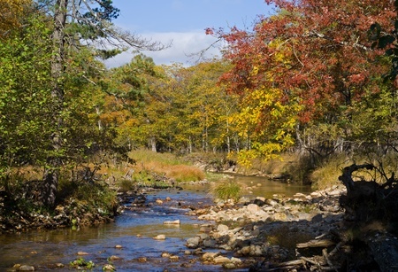 A landscape on small river in autumn forest. photo