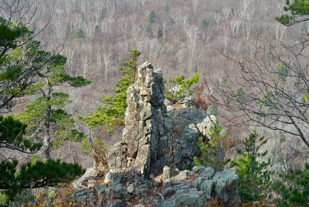 A rock and cedar pines among taiga. photo