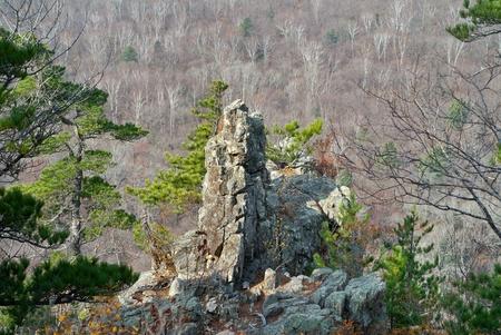 taiga: A rock and cedar pines among taiga.