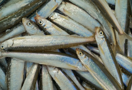 Catch on winter fishing. A close up of the fishes smelt on ice. photo