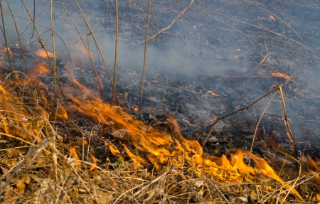 A close-uo of the flame of brushfire.
