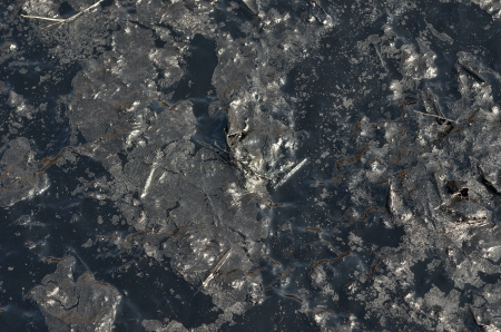 defilement: A close up of the surface of black oil pollution.