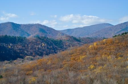 taiga: The landscape in autumn mountainous taiga. Stock Photo