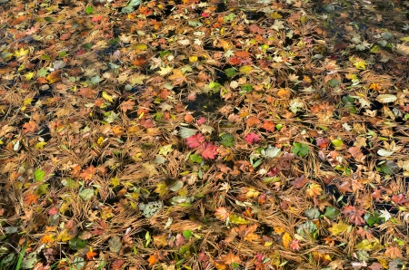 A close up of the autumn leaves on water. photo