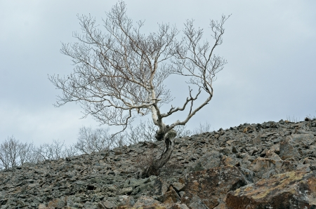 rockslide: A landscape in mountain taiga: birch on stones. Stock Photo