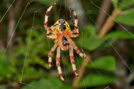 A close up of the spider on spider-web. photo