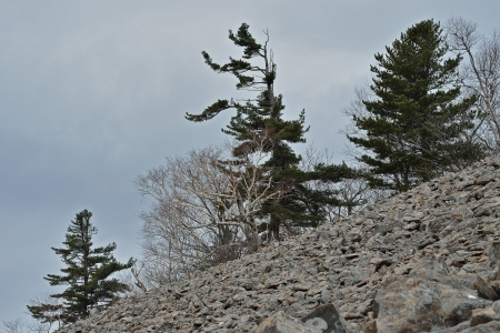rockslide: A landscape in mountain taiga: stones and trees.