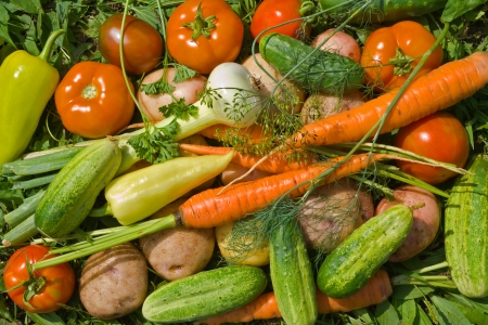 A close up of the fresh vegetables: carrot; onion; tomato; pepper; cucumbers; potato; parsley; dill. photo