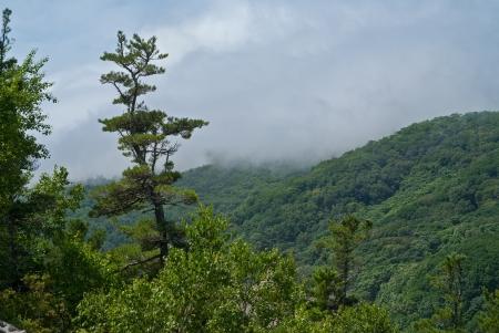 taiga: Le paysage de pins de la ta�ga, les montagnes, les nuages ??et le brouillard Banque d'images