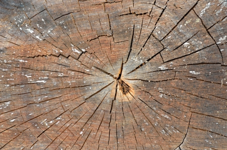 A close up of the very old cut of tree. Stock Photo - 22926769