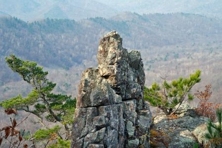 A rock and cedar pines among taiga. photo