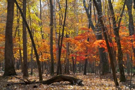 taiga: An autumn landscape in taiga.