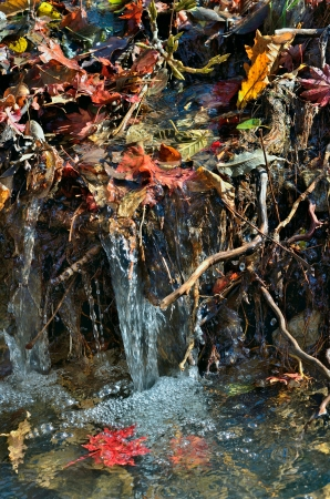riffle: A close up of the riffle on very small river with autumn leaves in jets.