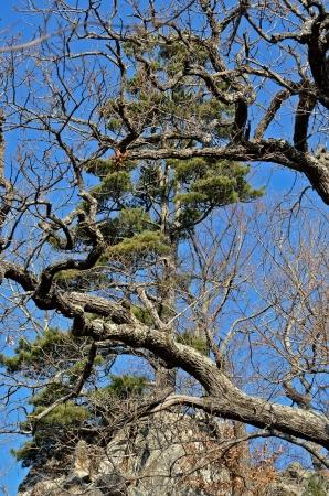 taiga: Un paysage de montagne ta�ga: pierres et les arbres.