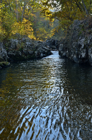 woodsy: A ravine on small woodsy mountain river.
