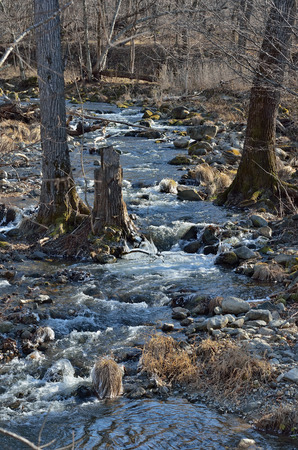 woodsy: A small woodsy mountain river in late autumn.