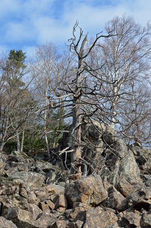 rockslide: stones and trees in mountain taiga