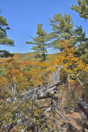 taiga: A landscape in autumn taiga. Stock Photo