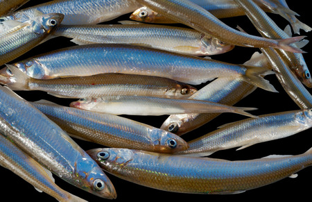 smelt: A close up of the small fishes (Smelt). Isolated on black.