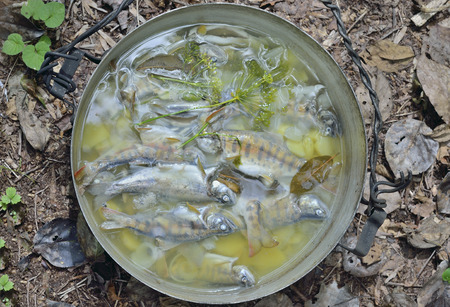 A fresh fish-soup in pot on nature. Standard-Bild