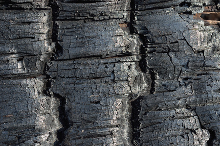 forest fire: A close up of the part of burned tree after forest fire. Stock Photo