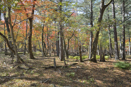 the taiga: A landscape in autumn taiga. Stock Photo