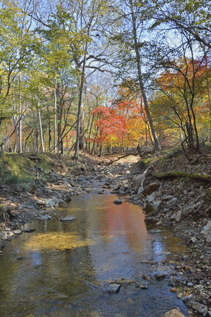 woodsy: A small woodsy river. An autumn.