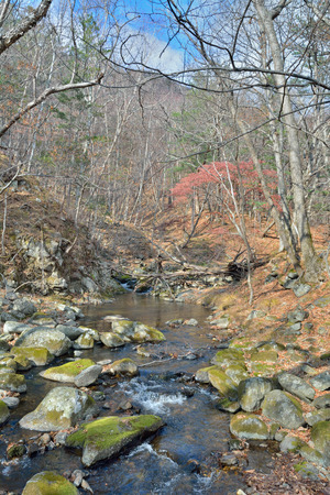 woodsy: A landscape on small woodsy river, autumn.