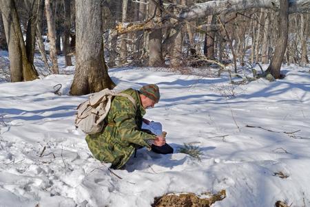 explores: The zoologist explores an amur (Siberian) tiger in far-eastern taiga.
