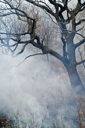 suppression: A suppression of forest fire. Early spring.