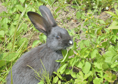 masticate: A close up of the young rabbit on grass.