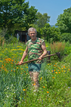 A man weeds garden-bed with hoe. Summer. photo