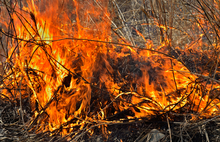 smother: A close up of the flame of brushfire.