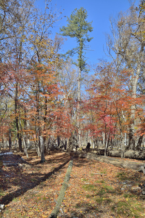 the taiga: The autumn landscape in taiga. Stock Photo