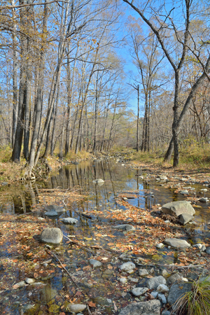 woodsy: A small woodsy river. Early autumn. Stock Photo