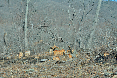 poaching: A landscape in forest after defotistation.