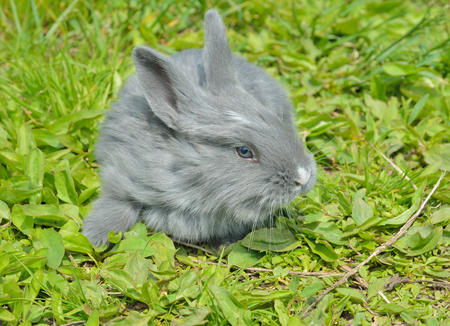 A close up of the young grey rabbit on grass. Stock Photo
