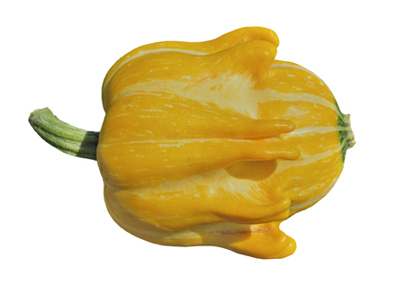 A close up of the yellow pumpkin. Isolate on white. Stock fotó